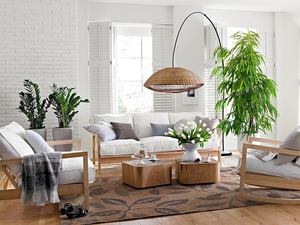 8 loại cây hợp phong thủy phòng khách giúp thu hút tài lộc
